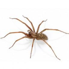 BUGOR-3458-Bug-Photos-300x300_0002_Spiders